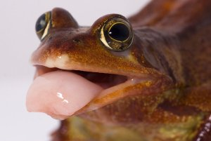 The_frogs_tongue_by_AngiNelson