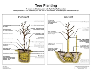 correct-way-to-plant-a-tree