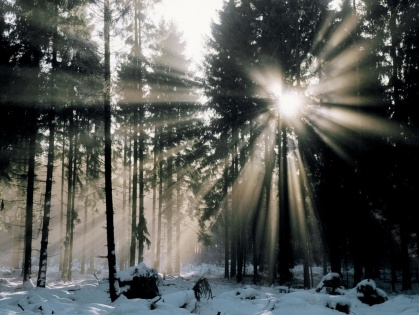 sun_through_the_trees_Wallpaper_2t4kw