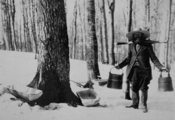 The day starts with me and Uncle Jebediah tapping the strongest maples and then skinning some possum hides.  The end result - delicious maple syrup and furry tea cozies.