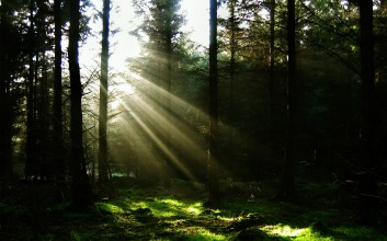 sun-through-the-trees-wallpaper-landscape-nature_00431270