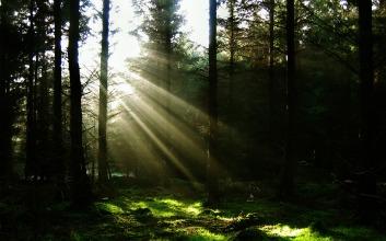 sun-through-the-trees-wallpaper-landscape-nature_00431270