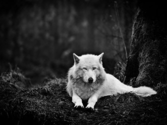 lone-wolf-pictures
